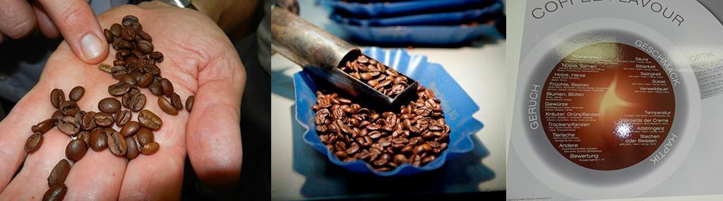 Coffee Cupping Criteria